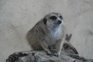 zoo018