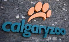 Calgary Zoo - Jan 2013
