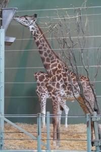zoo019
